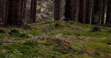 mykorrhiza was ist das