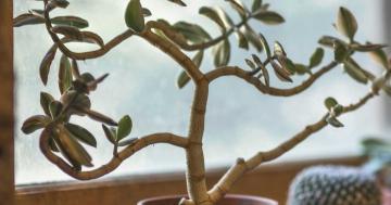 schlafen pflanzen zimmer
