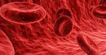 Blutkreislauf oder warum sind Venen blau und Arterien und Blut rot