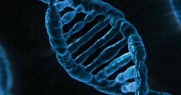 genfrequenz und evolution