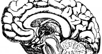 unterschied alzheimer demenz