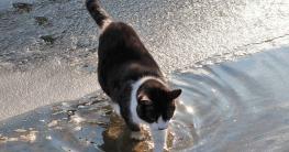 warum hassen katzen wasser