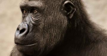warum ist evolution so wichtig