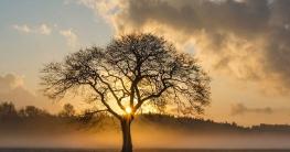warum verlieren bäume blätter im herbst und winter