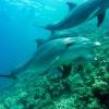 wie trinken delphine und wale
