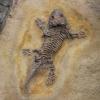 warum sind fossilien belege für die evolution