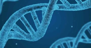 egoistische gene in der biologie und deren bedeutung