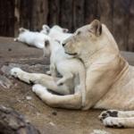 zweck der Evolution artenschutz selbsterhalt oder allele sichern