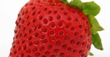 wieso sind erdbeeren nüsse