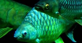 wofür haben fische schuppen