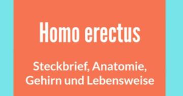 homo erectus steckbrief anatomie gehirn und lebensweise