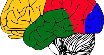 zerebraler kortex aufbau