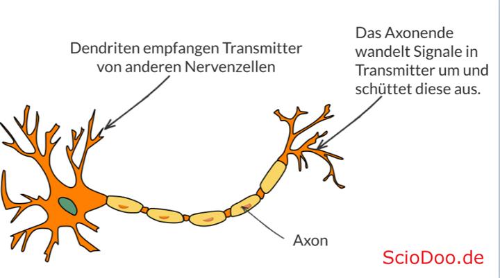 neurotransmitter nervenzelle