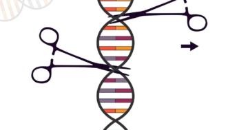 so funktioniert die CRISPR Cas-Methode beispiele zur verwendung der genschere