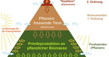 nahrungspyramide ökologie aufbau stufen